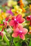 Florabloem Stock Fotografie