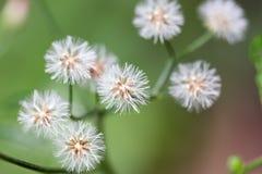 Florablume Lizenzfreies Stockbild