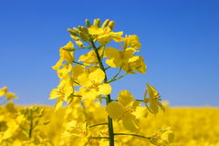 Floración. Imagenes de archivo