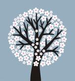 Floración Imágenes de archivo libres de regalías