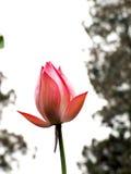 Floración Imagen de archivo