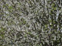 floración Fotos de archivo libres de regalías