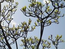 floración Imagenes de archivo