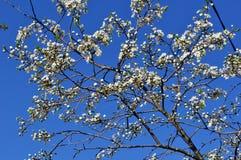 floración Foto de archivo libre de regalías
