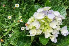 floración Fotografía de archivo libre de regalías