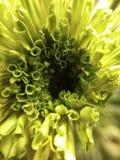 Floración Fotografía de archivo