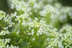 Floración blanca fotos de archivo