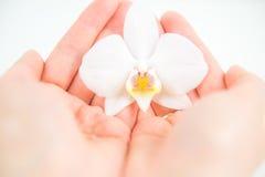 Floración blanca de la orquídea Imagenes de archivo