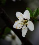 Floración con la hormiga fotografía de archivo
