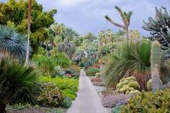 Floración de diverso cactus con las flores en desierto Fotos de archivo libres de regalías