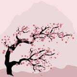 Floración de la cereza oriental stock de ilustración