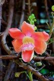 Floración de la flor Imagen de archivo
