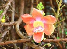 Floración de la flor Foto de archivo libre de regalías