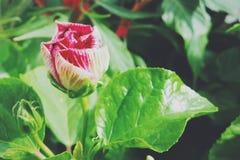 Floración de la flor Imagenes de archivo