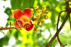 Floración de la flor Foto de archivo