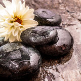 Floración de la flor blanca y rocas mojadas lisas del río Fotografía de archivo