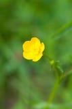 Floración de la flor del verano Fotografía de archivo libre de regalías