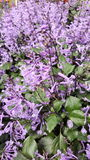 Floración de la flor en el amanecer Imagen de archivo