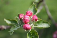Floración de la flor en la hoja Fotos de archivo libres de regalías