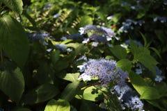 Floración de la flor fotos de archivo libres de regalías