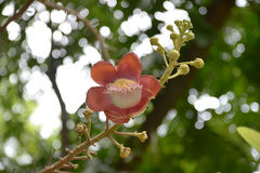 Floración de la floración Foto de archivo