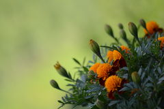 Floración de la naturaleza fotografía de archivo libre de regalías