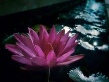 Floración de la noche imagen de archivo libre de regalías