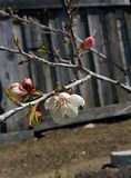 Floración de la primavera Fotos de archivo libres de regalías