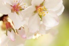Floración de la primavera Imagen de archivo libre de regalías
