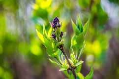 Floración de la primavera Fotos de archivo