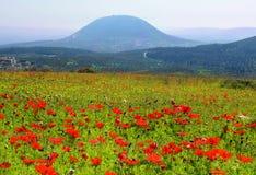 Floración de la primavera de amapolas en Galilea en el área de Nazaret, Israel imágenes de archivo libres de regalías