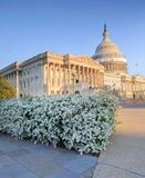 Floración de la primavera en el edificio del capitolio de los E.E.U.U. Fotos de archivo libres de regalías