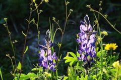 Floración de la primavera en las colinas de Judea fotos de archivo