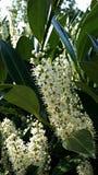 Floración de la primavera: Puget Sound Imágenes de archivo libres de regalías