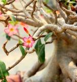 Floración de las flores Imagen de archivo libre de regalías