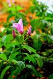 Floración de las flores Foto de archivo