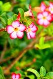 Floración de las flores Foto de archivo libre de regalías