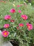 Floración de las flores Fotografía de archivo