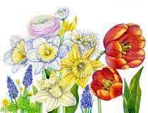 Floración de las flores de la primavera de la acuarela imagen de archivo