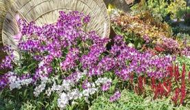Floración de las flores de las orquídeas en primavera fotos de archivo