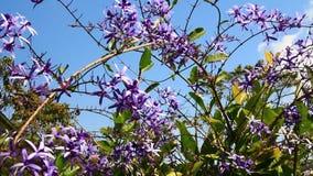 Floración de las flores en el jardín almacen de metraje de vídeo
