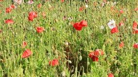 Floración de las flores en el jardín metrajes