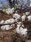 Floración de las flores en las montañas fotografía de archivo libre de regalías