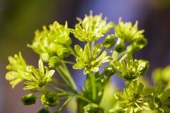 Floración de las flores en un árbol en primavera Fotografía de archivo libre de regalías