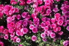 floración de las flores que hace un fondo floral imagenes de archivo