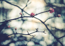 Floración de los árboles Imagen de archivo libre de regalías