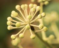 Floración de los arbustos Foto de archivo libre de regalías