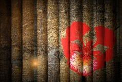 Floración de Poinciana real rojo imagenes de archivo