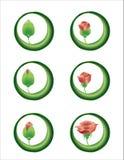 Floración de Rose ilustración del vector
