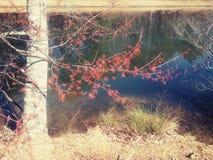 Floración del árbol Fotos de archivo libres de regalías